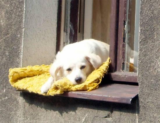 Foto-dnia: Psie wakacje na Warownej
